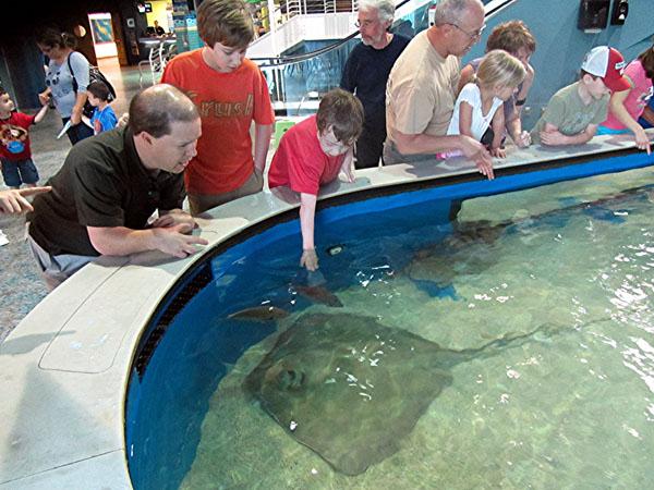Todd Swank Florida Aquarium And Tampa Bay Dolphin Tour